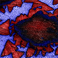 AFM Application: 2D Materials, Graphene